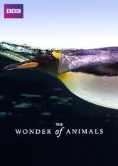 The Wonder of Animals Netflix UK (United Kingdom)